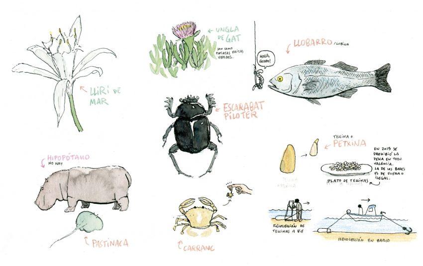 Lámina de una acuarela con animales de playa de la comunidad Valenciana y el Mar Mediterráneo.