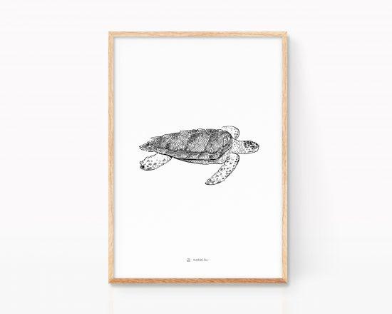Cuadro con la ilustración de una tortuga marina boba (caretta caretta). Print animales marinos en peligro de extinción. Mediterráneo, atlántico
