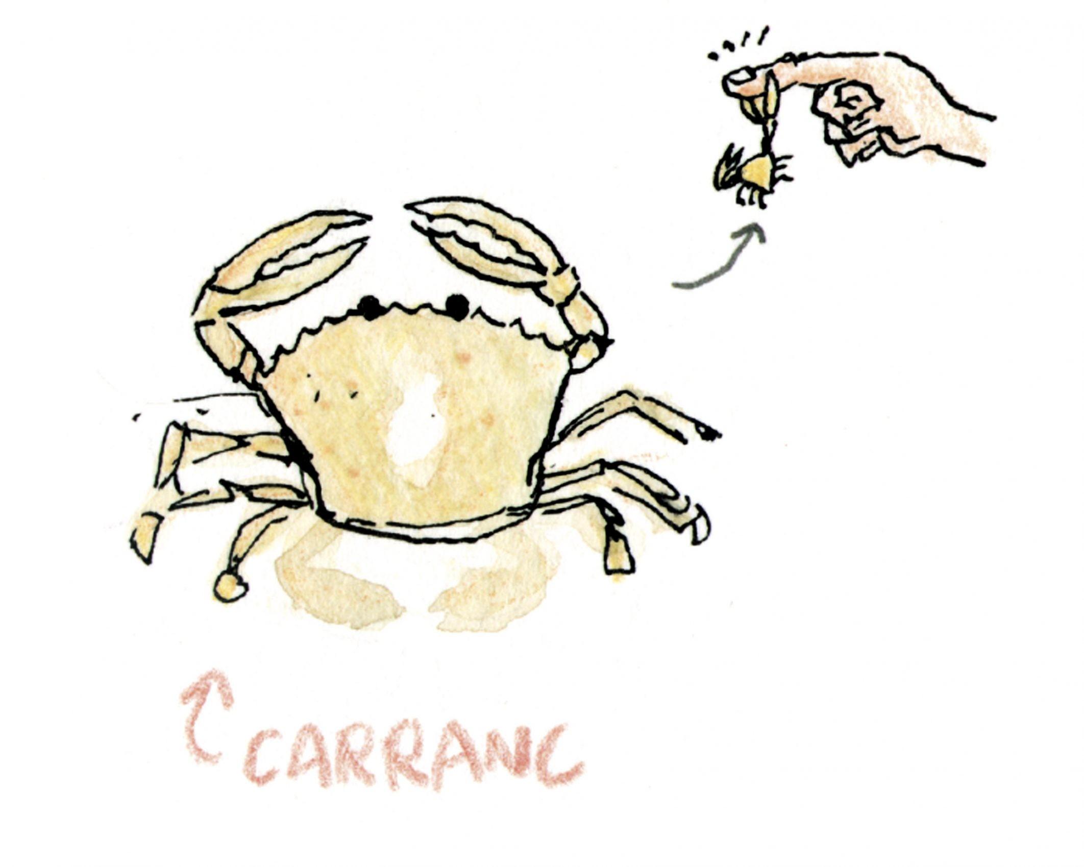 Lámina con una ilustración en tinta y acuarela sobre papel de un cangrejo de playa (Carranc en Valencia)