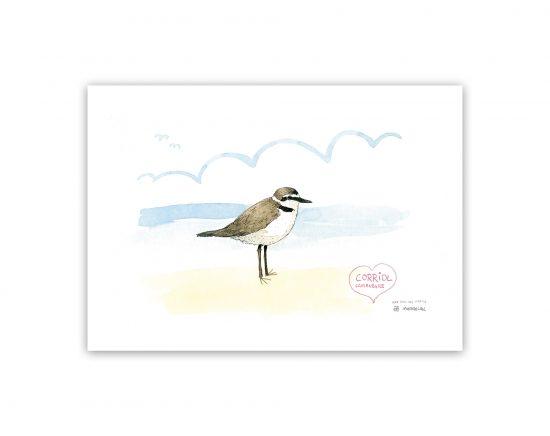 Lámina dibujo en acuarela de un corriol. Un pájaro típico de las playa de valencia