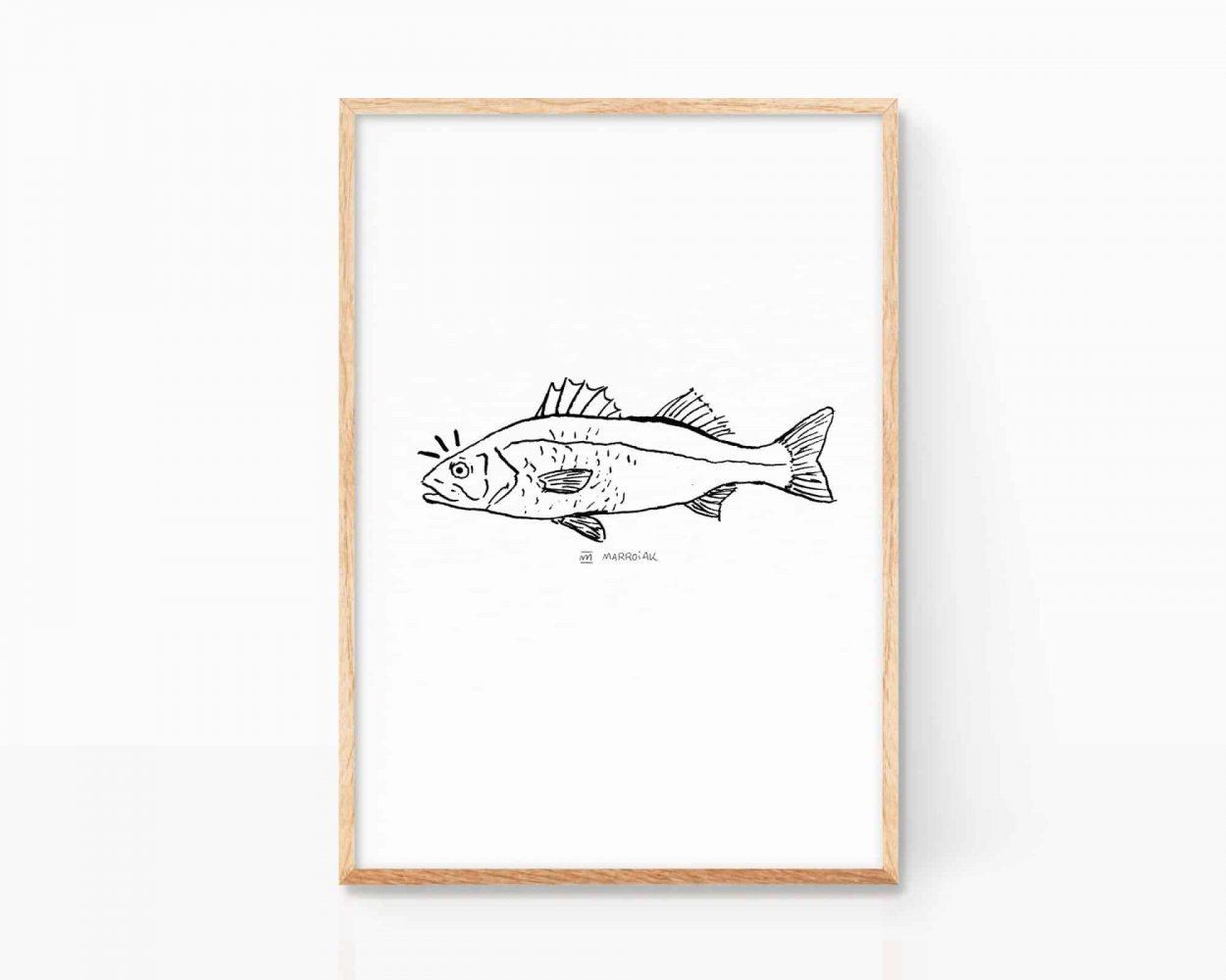 Cuadro decorativo de un pez lubina en blanco y negro. Ilustración en tinta sobre papel. Lámina print calidad museo