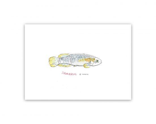 Lámina con una ilustración en acuarela de una samaruc, pez autóctono de valencia