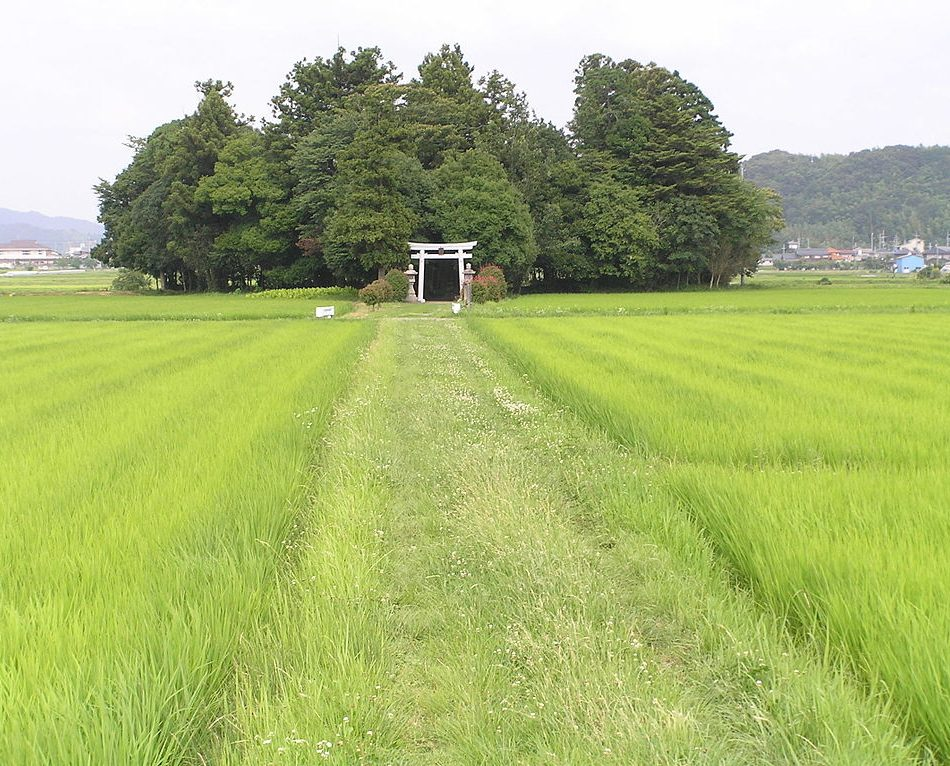 Los bosques de Miyawaki