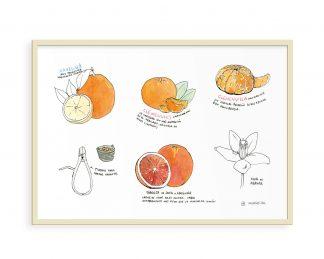 Lámina dibujo naranjas de Valencia