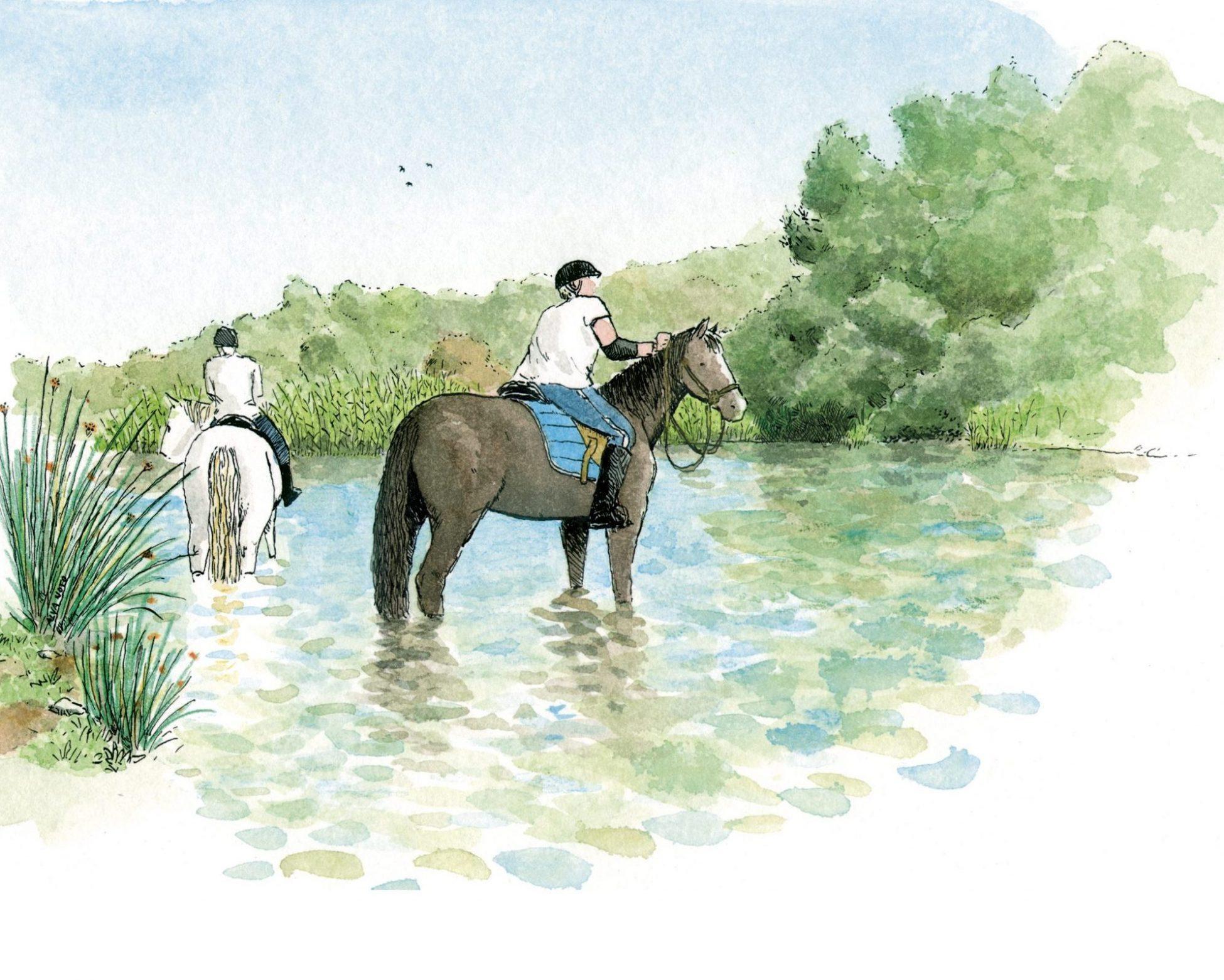 Dibujo de dos caballos en el rio bullent en el parque natural de la marjal pego oliva. Valencia